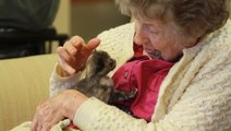 Kittens Bring Depth, Meaning and Joy Into the Lives of Seniors