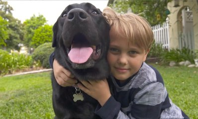 A Diabetic Alert Dog Becomes a Young Boys Best Friend