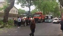 Sarıyer'de tırın çarptığı ağaç otobüs durağına devrildi - İSTANBUL