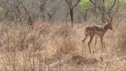 Wild 4 - Rhino : Fight for Survival