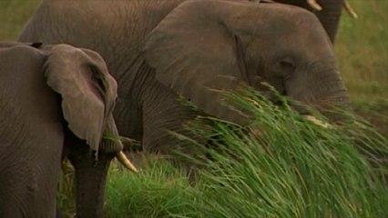 Wild 2 - Elephant
