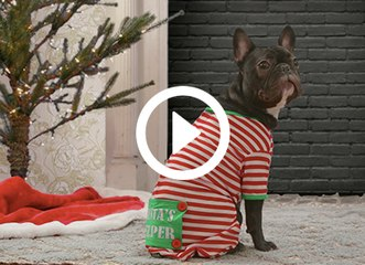 The Story of 'Santa Paws,' as Told by the Pups of PureWow