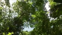 Les arbres, des puits de carbone précieux pour le climat