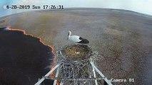 Russie : une cigogne couve ses œufs au-dessus des flammes