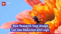 Wasps Are Smart Insects