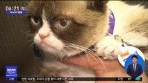 [이 시각 세계] SNS 스타 '화난 얼굴' 고양이 7살 나이로 세상 떠나