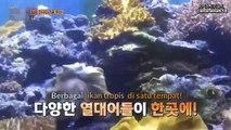 EXO LADDER S2 EP 37 SUBINDO