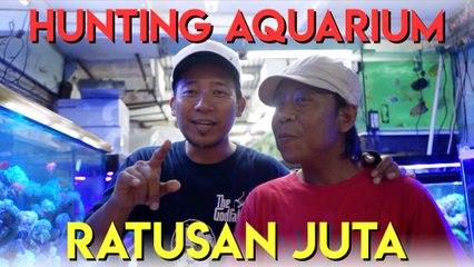 hunting aquarium ratusan juta