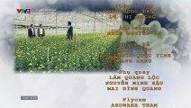 Hoa Cúc Vàng Trong Bão Tập 35 ~ Bản Chuẩn ~ Phim Việt Nam VTV3 ~ Phim Hoa Cuc Vang Trong Bao Tap 36 ~ Phim Hoa Cuc Vang Trong Bao Tap 35