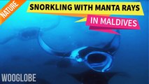 Snorkeling with Manta Rays in Maldives