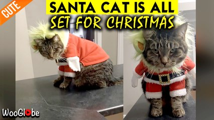 Santa Cat Is Coming To Town With Lots Of Cuteness