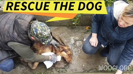 Rescue of a poisoned dog | Touching story || WooGlobe