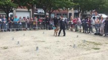 LIEGE - Concours canin Esplanade Saint Leonard - Démonstration de la brigade canine de Liege