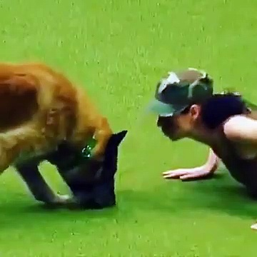 Army Dog Training Shows The Level Of Intelligence It Possesses