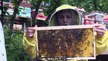 Hayallerine arı ve bal üretimiyle kavuştu - DÜZCE