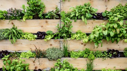 These are the Easiest Herbs to Grow