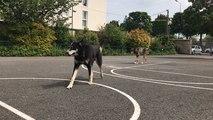 L'explorateur et ses chiens de traîneaux fait escale à l'école Lyautey