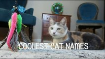 BEST CAT NAMES Coolest Kitten Names (Watch Cute Kitties) VOTE FOR YOUR FAVOR