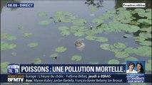 À cause de la pollution, des centaines de poissons retrouvés morts chaque jour dans une rivière de Vendée