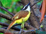 Cet oiseau est tellement gracieux. Il va vous hypnotiser !