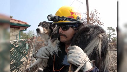 Search and Rescue Dogs Have Heart