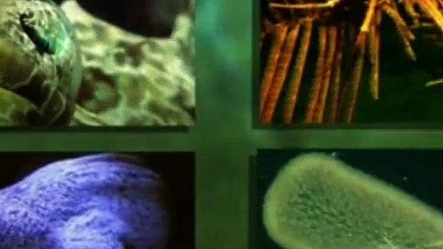 Ancient Aliens Season 10 Episode 7 Creatures of the Deep
