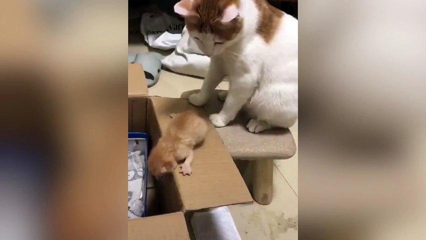 Mamá gata y el límite de la paciencia felina con su cría