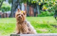 Alles über die Sterilisation von Hunden