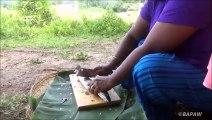 Alevins de poissons Recette  Réservoir d'Alevins de Poissons par la Petite-Fille, Mère | Village de la Nourriture
