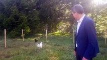 Quand le maire de Gérardmer reçoit un coq en cadeau