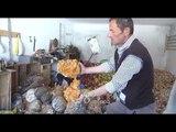 RTV Ora - Bulqizë, fermerit i kalbet prodhimi se nuk ka treg, e flak në lumë
