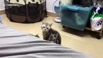 Mother cat scared by own kitten in China's Guangdong