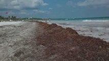 Estados | Así lucen las playas mexicanas por el Sargazo
