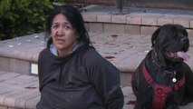 Did Woman Accused of Leading RV Chase Steal Dogs as Well?