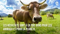 Ces agriculteurs ont trouvé un régime pour les vaches qui n'est pas nocif pour l'environnement