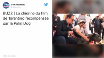 Festival de Cannes. Le pitbull du film de Tarantino récompensé par la Palm Dog