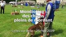 VIDEO. A Celles-sur-Belle, ces chiens ont du mordant