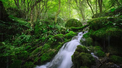 Babbling Brook in Wild Green Forest   24 Hours - 4K, Water Sounds, Deep Sleep, Focus, Studying, White Noise, Nature Sound