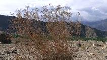 Ladakh, le progès en route