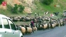 Koyun sürüsü karayolunu trafiğe kapattı, sürücüler şaştı