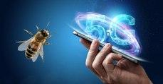 La 5G dangereuse pour les insectes ?