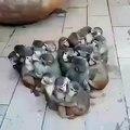 Ces bébés singes vont vous faire sourire de joie. Trop mimi !