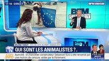 Élections européennes: succès surprise du parti animaliste
