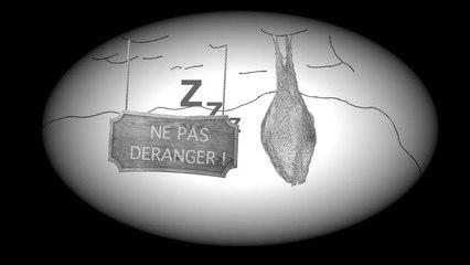 Connaitre et protéger les chauves-souris du Cantal