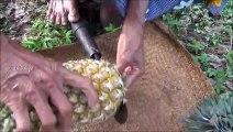 Village Fruits Frais  Ananas Frais pour des passionnés par la grand-mère Et de la Famille
