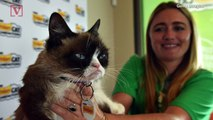 Grumpy Cat Dies, Family Says Her Spirit Will 'Live on Through Her Fans'