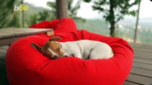 Some Helpful Tips You Need To Know Before Bringing Home a New Pet