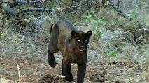 WILD AFRICA •• Episode 1 () MOUNTAINS •• BBC HD