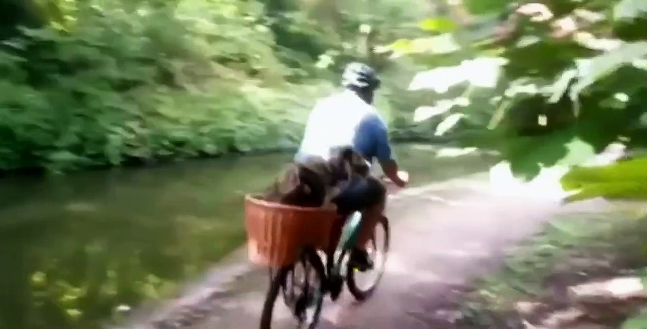 Funny Dogs on Bicycle  Compilation 2019 | Funny Dogs on Bicycle   | Animal Videos