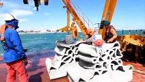 LE CAP D'AGDE - Des récifs artificiels sont immergés autour du Fort de Brescou pour amplifier la biodiversité